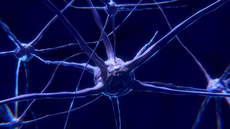 Neuron - Obrázek